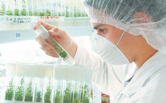 La industria necesita explicar el uso de nanopartículas en los alimentos